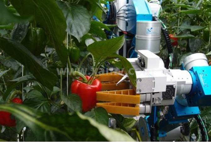 机器视觉系统农业领域的应用介绍
