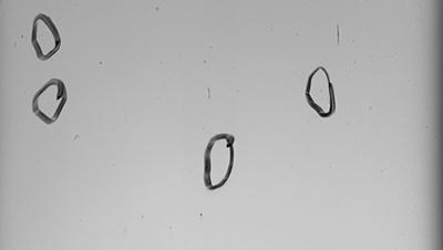 【维视智造】曲面屏表面瑕疵检测